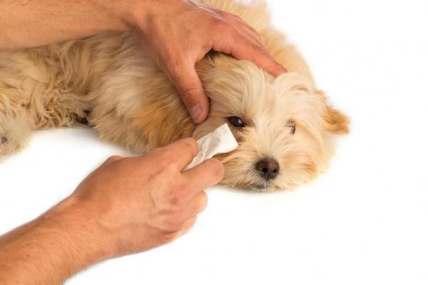 pulire l'occhio del cane
