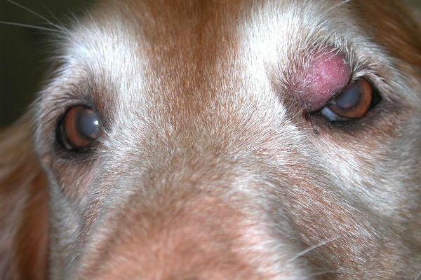 cane nervoso