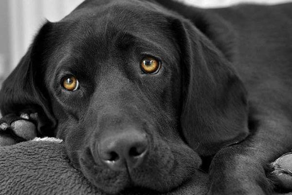 cane con occhi grandi