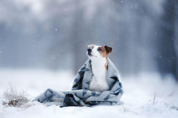 cane osserva la neve