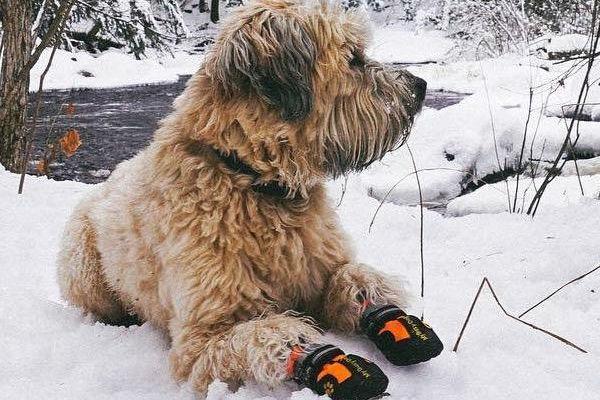 Artrite nel cane in inverno: 7 modi per alleviare il dolore