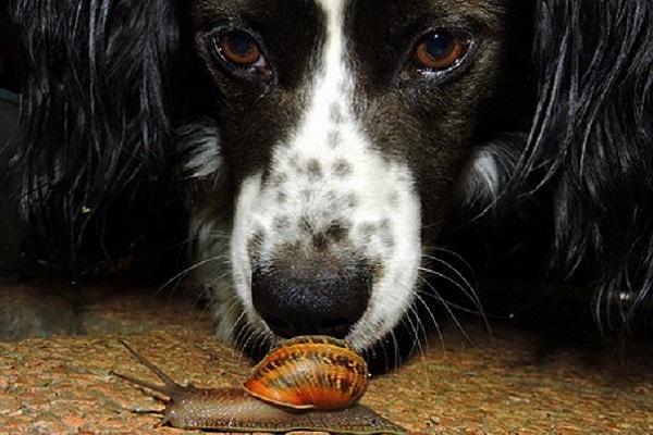 Perché i cani annusano tutto?