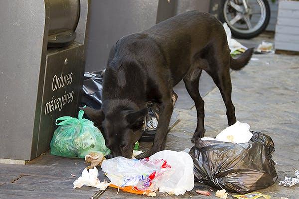 cane rovista tra i rifiuti