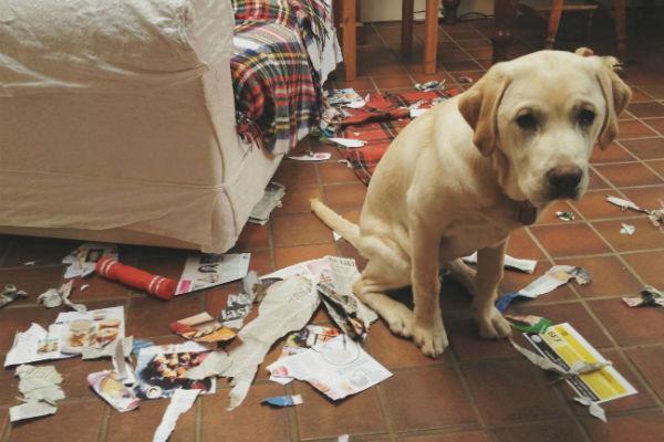 cosa non possono fare i cani