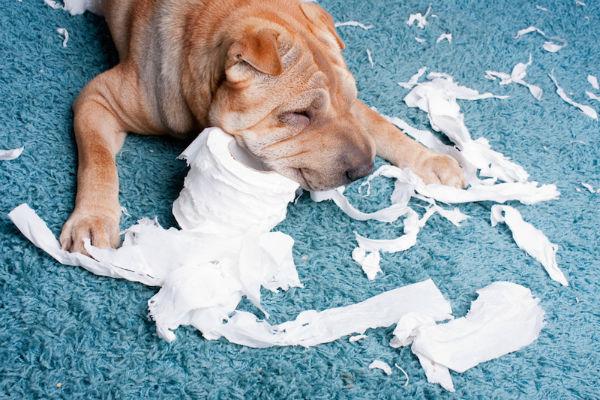 cane strappa la carta igienica