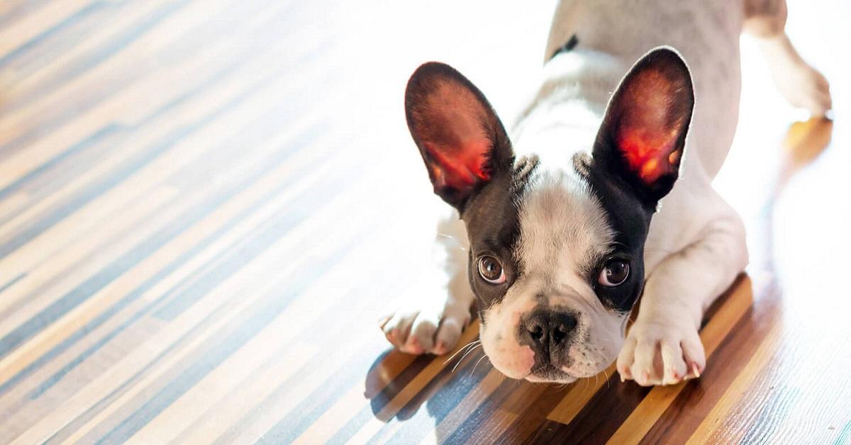 Perché i cani annusano le parti intime degli umani?
