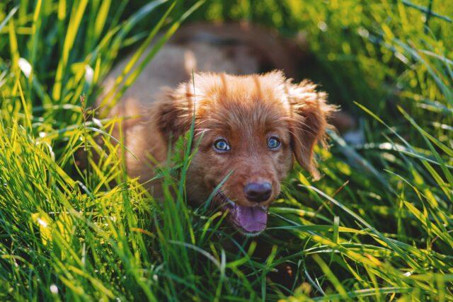 cagnolino felice in mezzo all'erba