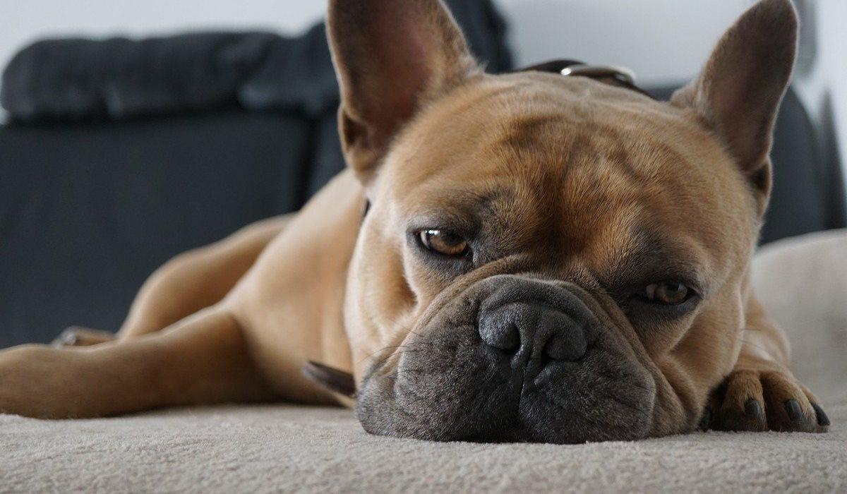 cane disteso sul pavimento