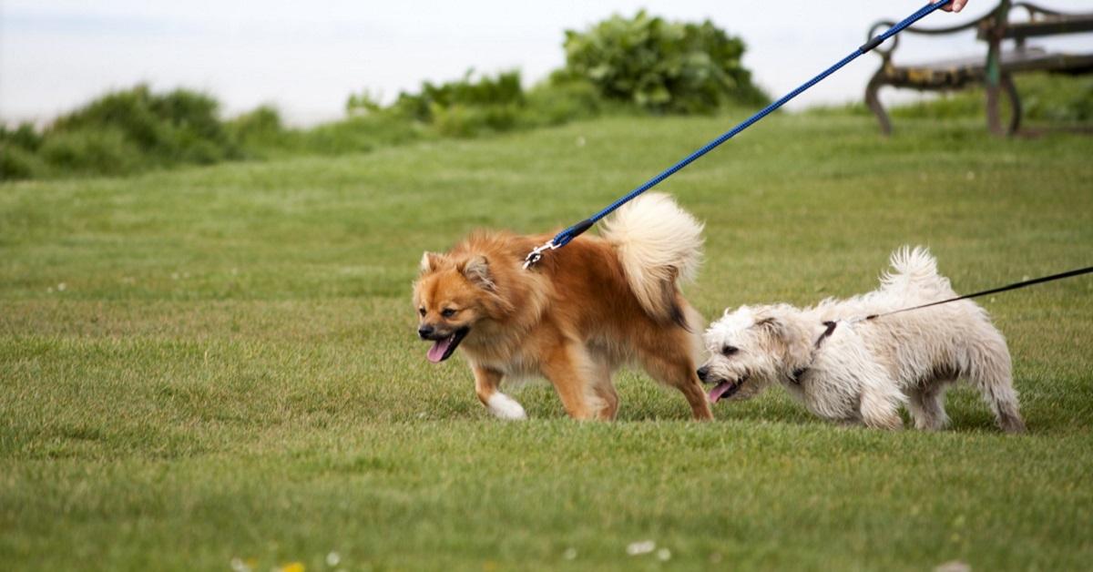 Perché il cane tira al guinzaglio? Tutti i motivi e come ovviare