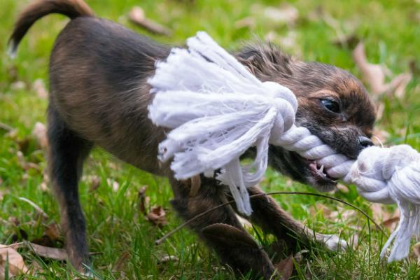 Come pulire i denti al cane?