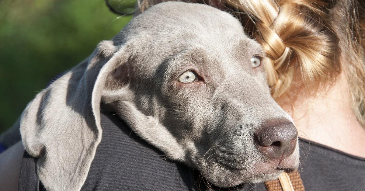 Saliva del cane: cosa contiene, a cosa gli serve e che cosa sapere