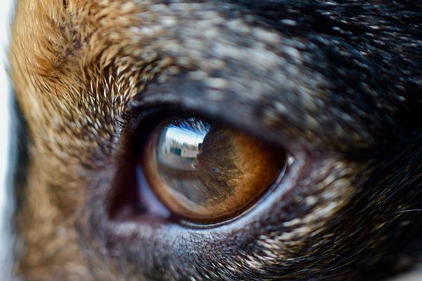 pupilla cane