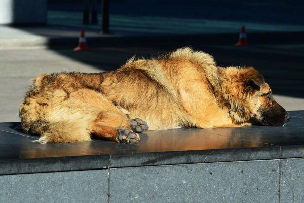cane su una panchina