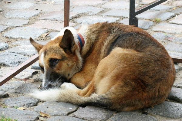 Trovare un cane smarrito, come procedere
