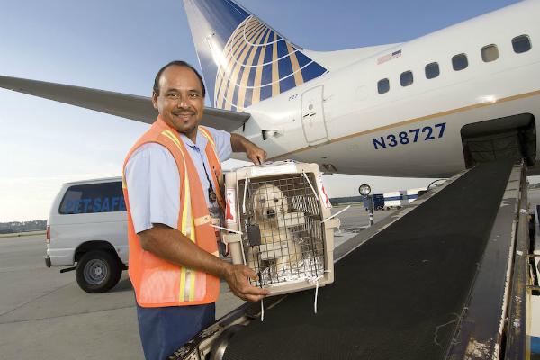 Viaggiare con il cane in aereo, cosa sapere?