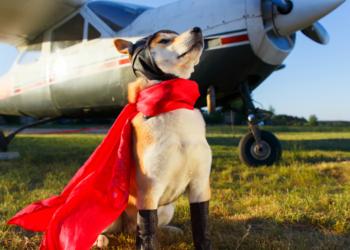 cane pilota