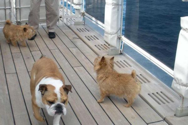 cani passeggiano sulla nave