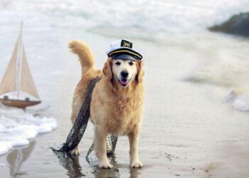 cane capitano