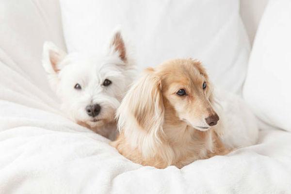 due cani a letto
