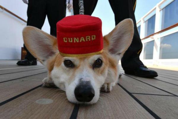 cane in crociera