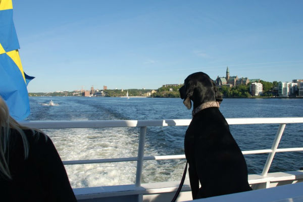 cane sul traghetto