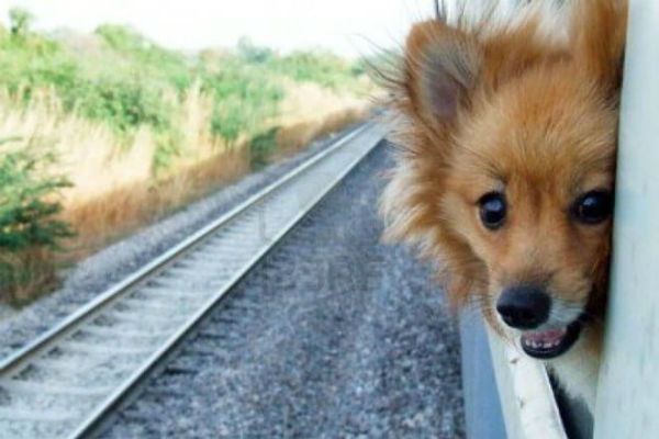 cane affacciato dal treno
