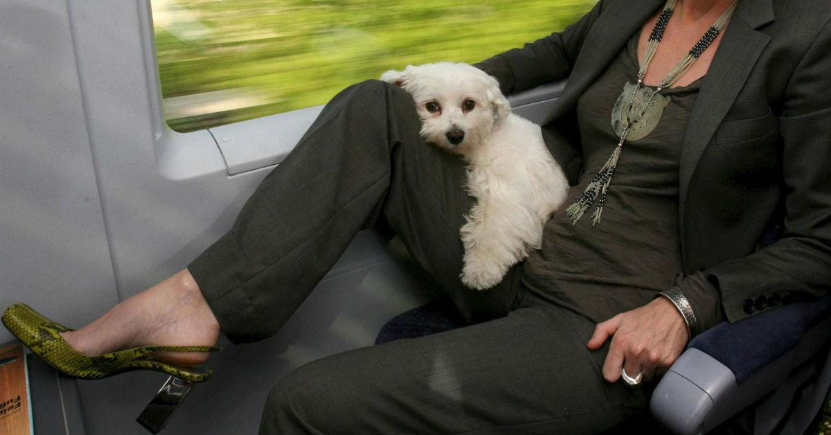i cani in treno possono viaggiare liberamente