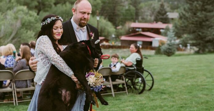 Cane accompagna proprietaria all'altare