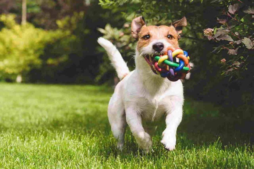 Cane che corre in giardino