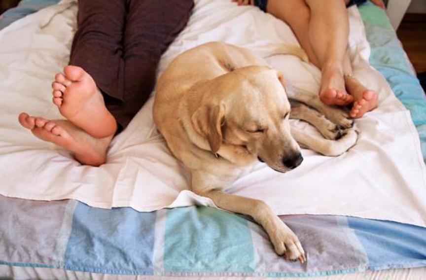 Cane che dorme ai piedi del letto