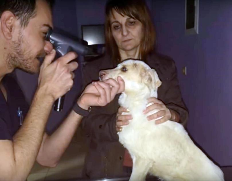 Cane che fa una visita agli occhi
