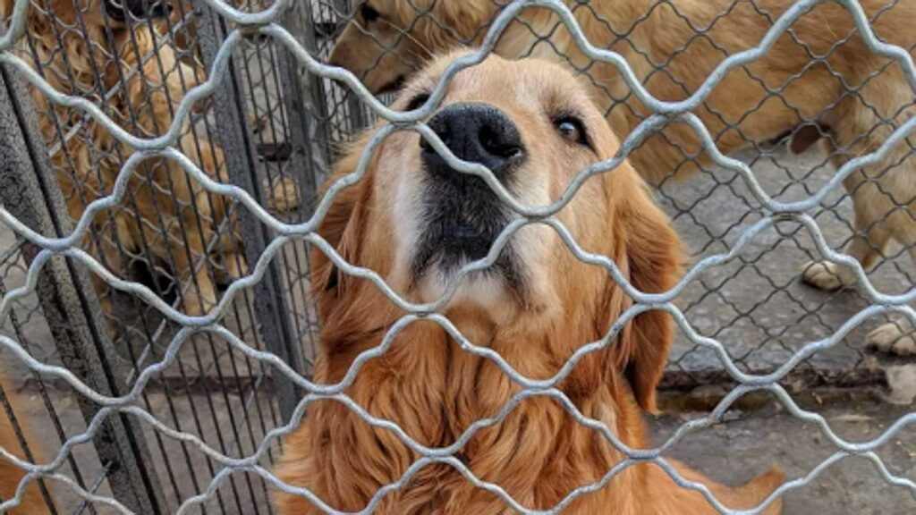 Cane che fissa da dietro una rete