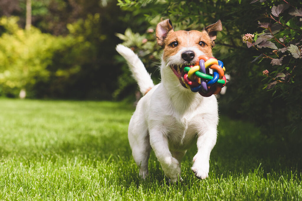 Cane che gioca