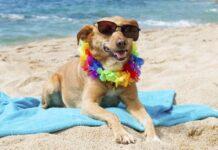 i cani possono mettere la protezione solare