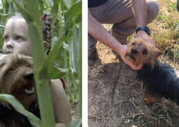 Cane che salva una bambina dispersa