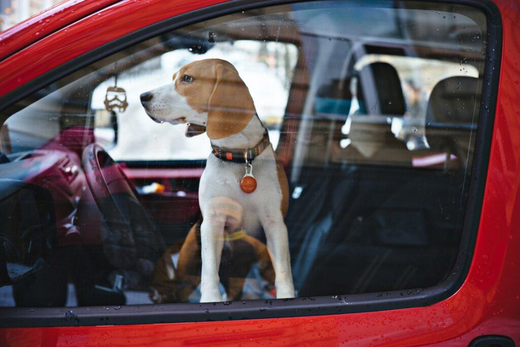 Cane chiuso in macchina