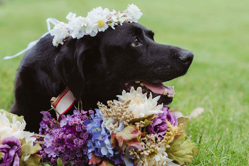 Cane con corona di fiori in testa