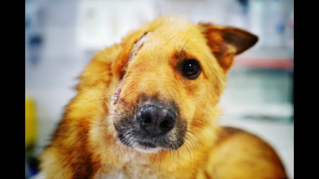 Skye, il cane con metà faccia che ha trovato la felicità