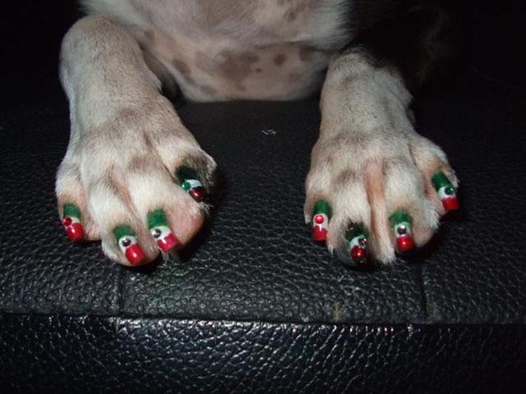 Cane con le unghie colorate