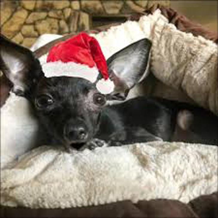 Cane con un cappello da Babbo Natale