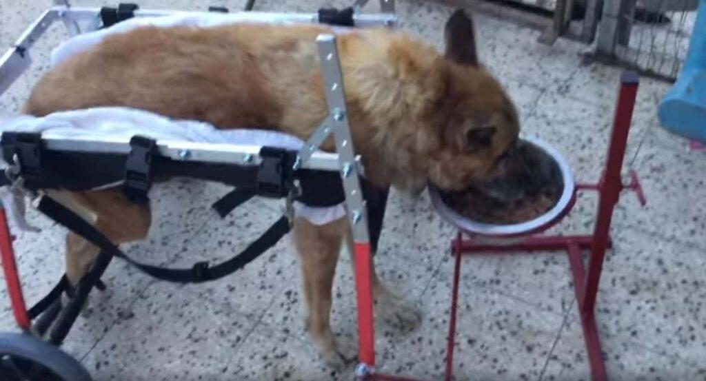 Cane con un carrellino che mangia