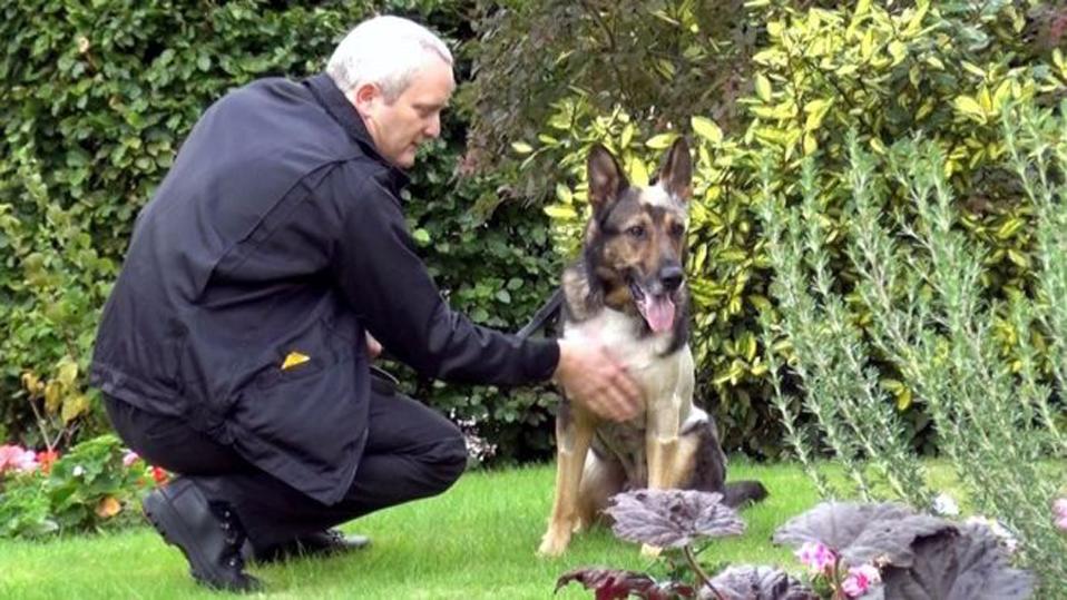 Finn, il cane poliziotto il cui coraggio ha ispirato una nuova legge