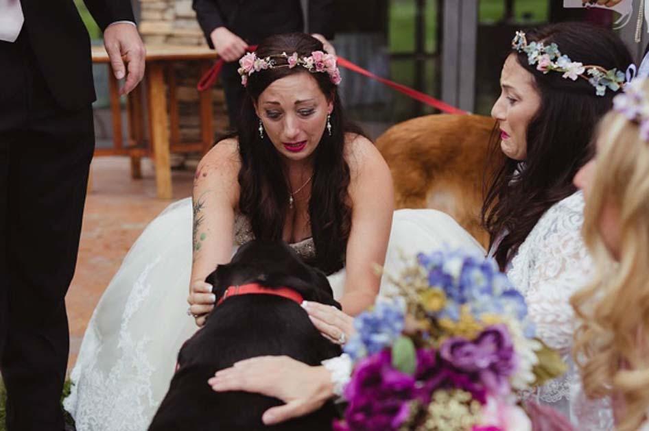Cane con una sposa