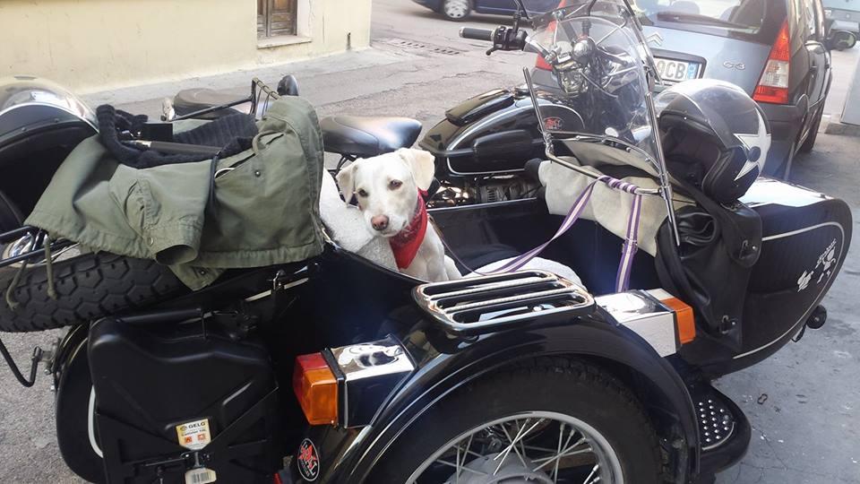 Cane dentro ad una moto