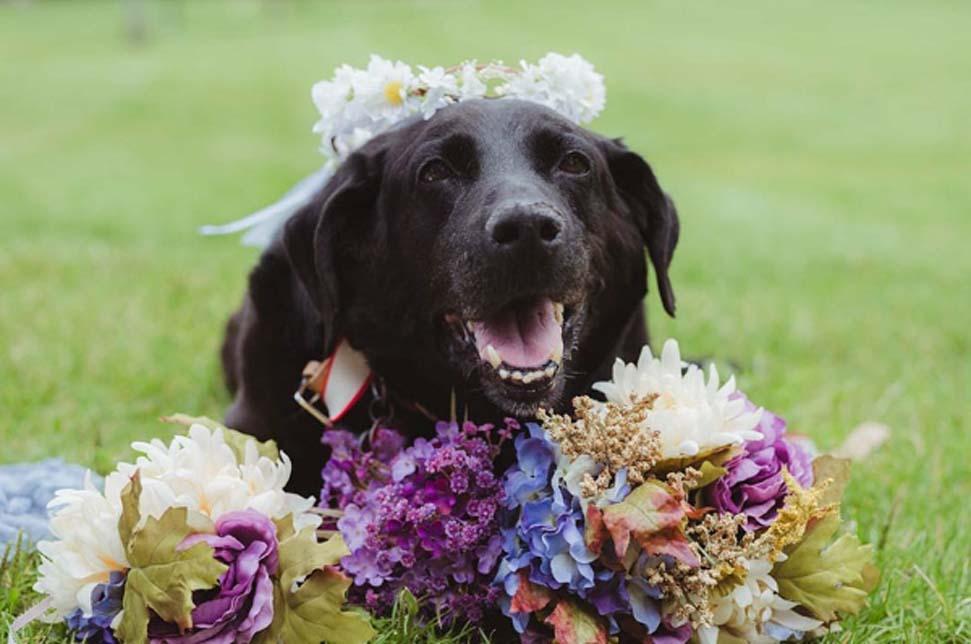 Cane durante un matrimonio