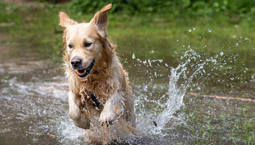 Cane felice nell'acqua