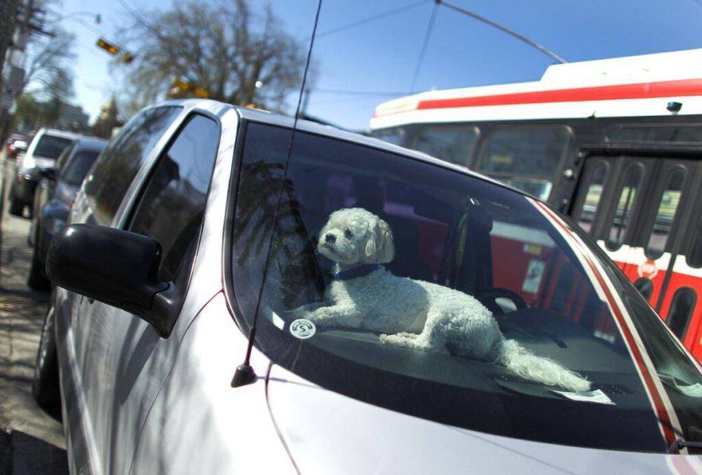 Lignano Sabbiadoro: cane chiuso in auto salvato dai pompieri