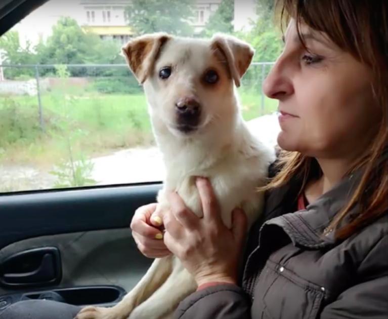 Cane in macchina con una donna