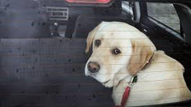 Cane lasciato in macchina