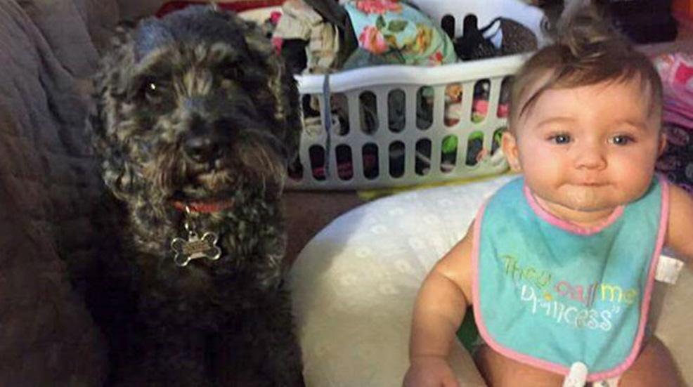 Cane nero con una neonata
